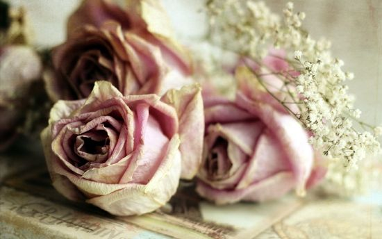 как правильно засушить розы в домашних условиях