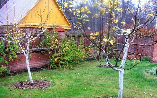 яблони на зиму подготовка