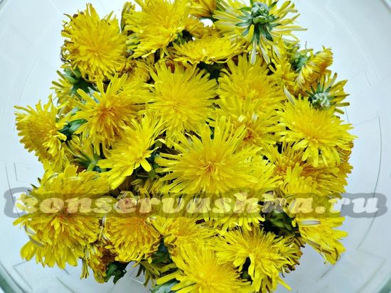 Берем цветы одуванчика