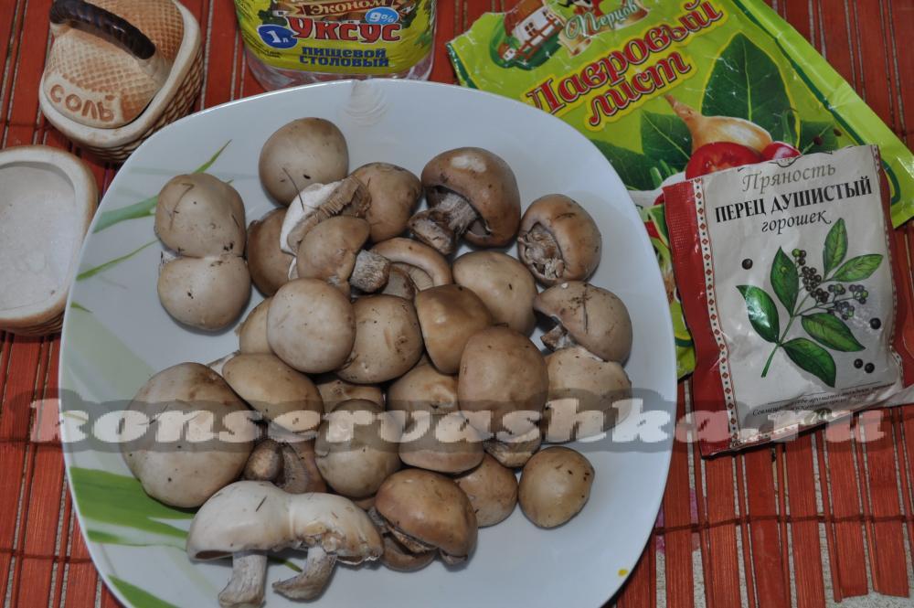как сушить грибы синеножки